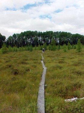 aug30-04-marsh-boardwalk-1-northlooking