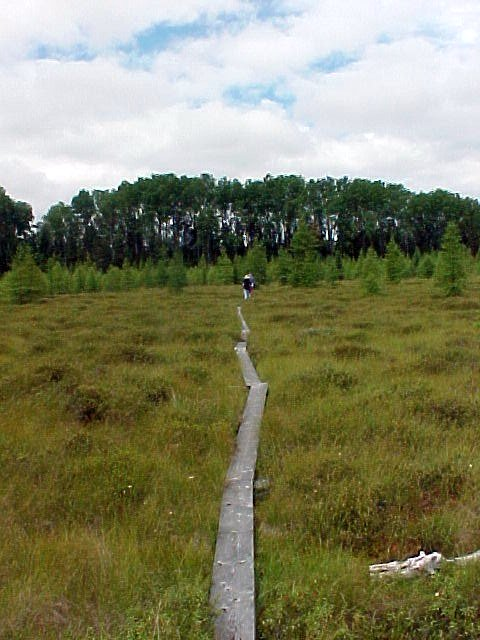 aug30-04-marsh-boardwalk-1-northlooking