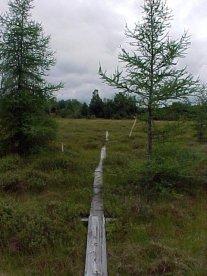 aug30-04-marsh-boardwalk-2-southlooking