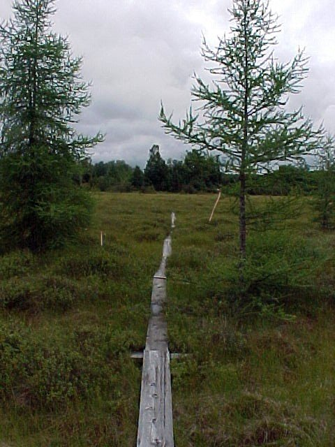 aug30-04-marsh-boardwalk-2-southlooking