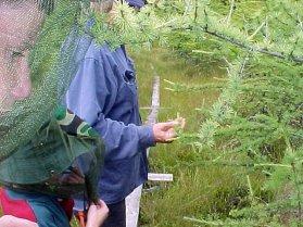 aug30-04-vegetation-education-larch