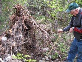 Soil studies on the esker